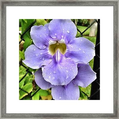 Another Flower Shot #flower #lavender Framed Print