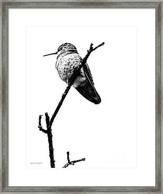 Framed Print featuring the digital art Another Little Bird by Rhonda Strickland