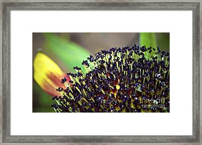 Another Phase Framed Print by Gwyn Newcombe