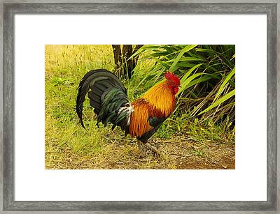 Another Rooster Framed Print by John  Greaves