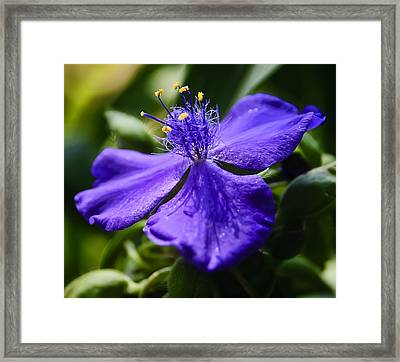 Antennae Reaching For Contact  Framed Print by Michael Putnam
