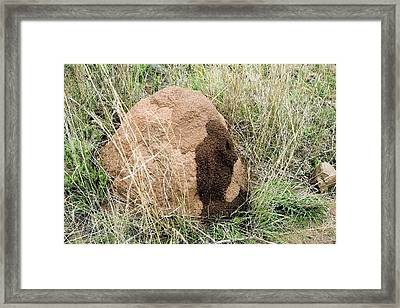 Anthill Being Constructed Framed Print by Sheila Terry