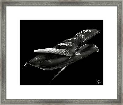 Anthurium In Black And White Framed Print