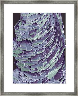 Antihistamine Drug Crystals, Sem Framed Print by Steve Gschmeissner