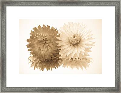 Antique Floral Duo Framed Print by Heidi Smith