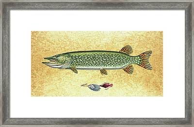 Antique Lure And Pike Framed Print