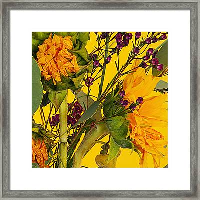 Antique Sunflower Framed Print by Michelle Armstrong