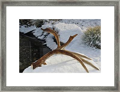 Antler 2 Framed Print by Heather L Wright