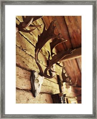 Antler Collection On Wall Framed Print by Granefelt, Lena