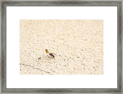 Ants Framed Print by Isabel Poulin