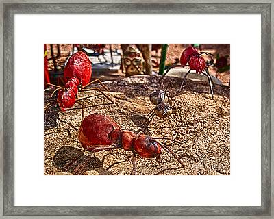 Antsy Framed Print by Ken Williams