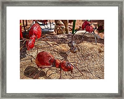 Antsy Framed Print