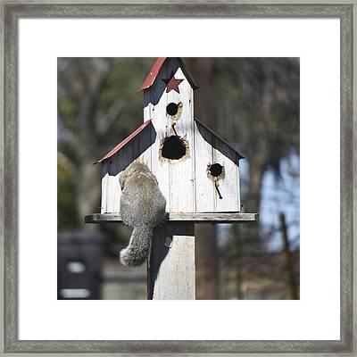 Anyone Home Framed Print by Teresa Mucha