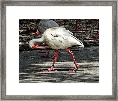 Anyone Under Me Framed Print by Dennis Dugan