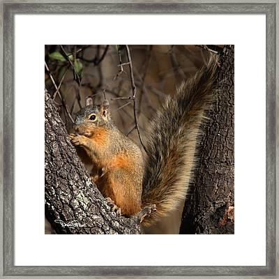 Apache Fox Squirrel Framed Print by David Salter
