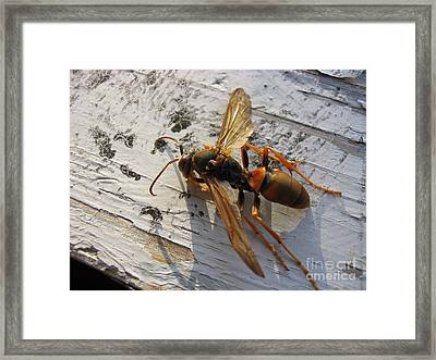 Apache Red Wasp Framed Print