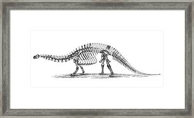 Apatosaurus Excelsus,  Aka Brontosaurus Framed Print by Science Source