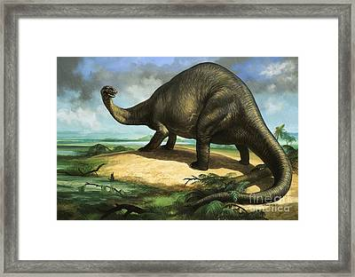 Apatosaurus Framed Print by William Francis Phillipps