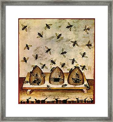 Apiculture-beekeeping-14th Century Framed Print by Science Source