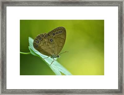 Appalachian Brown Framed Print