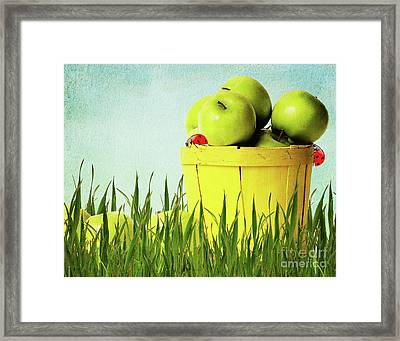 Apples Framed Print by Angela Doelling AD DESIGN Photo and PhotoArt
