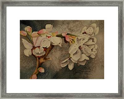 Framed Print featuring the painting Apple Blossom by Teresa Beyer