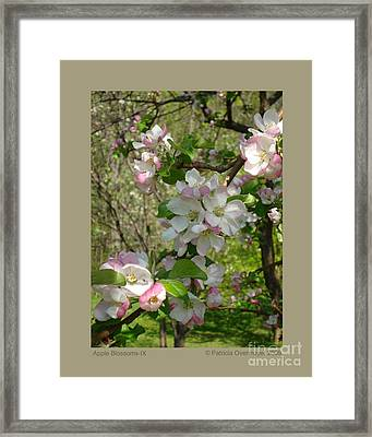 Apple Blossoms-ix Framed Print