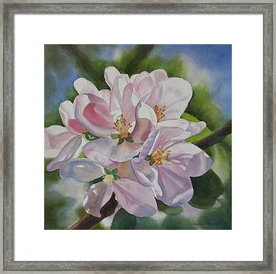 Apple Blossoms Framed Print by Sharon Freeman