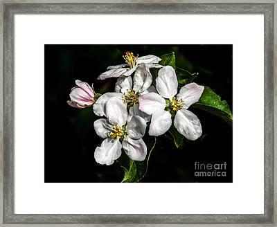 Apple Bouquet Framed Print