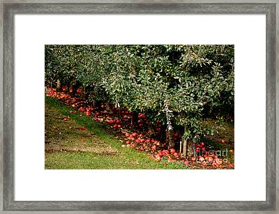 Apple Fall Framed Print