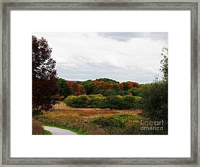Apple Orchard Gone Wild Framed Print by Barbara McMahon