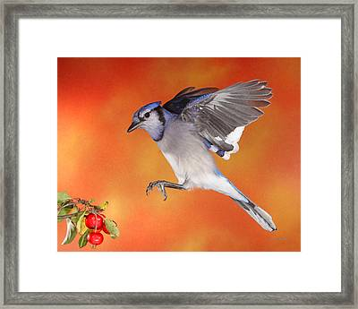 Apple Thief Framed Print by Gerry Sibell