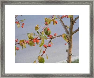Framed Print featuring the photograph Apple Tree by Bogdan Floridana Oana