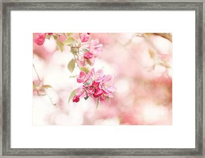 Apple Tree In Spring Framed Print