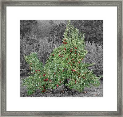 Apple Tree Framed Print by John Small