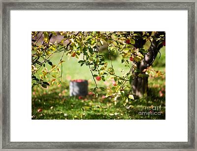 Apple Tree Framed Print by Kati Molin