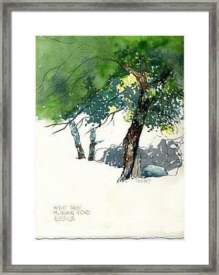 Apple Tree Morgan's Pond Framed Print by Catherine Twomey