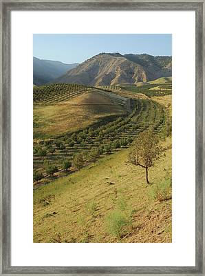 Apple Tree Orchard Like River In  Mountain Framed Print