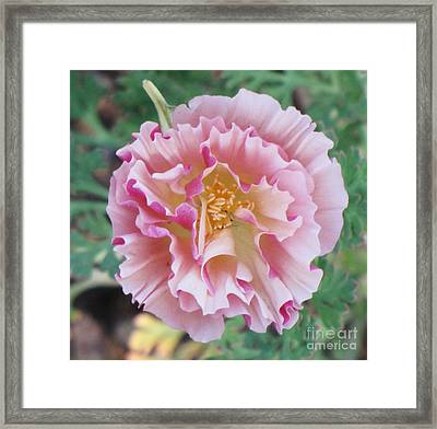 Framed Print featuring the photograph Appleblossom Poppy by Michele Penner