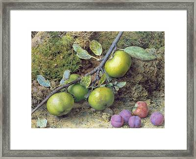 Apples And Plums On A Mossy Bank Framed Print by John Sherrin