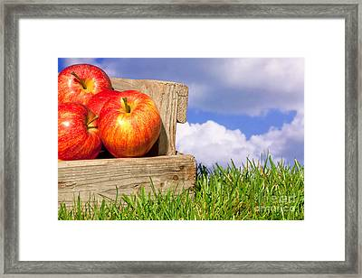 Apples In A Crate On Grass With Blue Cloudy Sky Framed Print by Richard Thomas