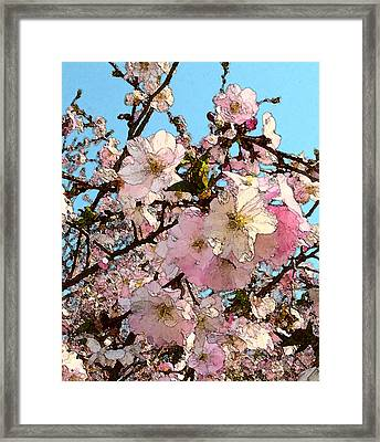 April Morning With Cherry Blossoms Framed Print by Katharine Birkett