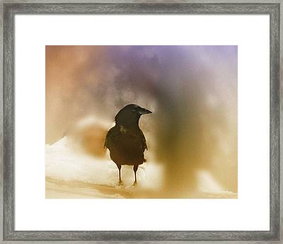 April Raven Framed Print by Susan Capuano