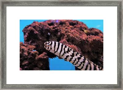 Aquarium Art 14 Framed Print by Steve Ohlsen