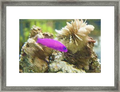 Aquarium Art 23 Framed Print by Steve Ohlsen