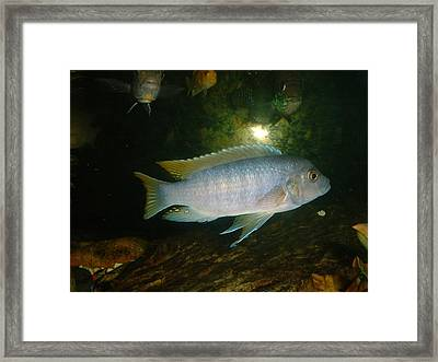 Framed Print featuring the photograph Aquarium Life by Bonfire Photography