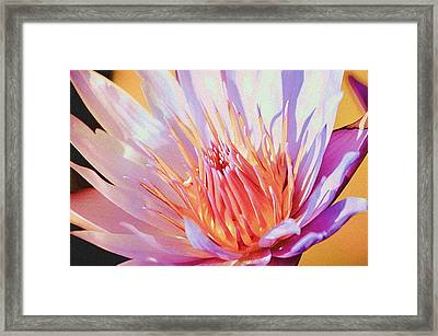 Aquatic Bloom Framed Print by Julie Palencia