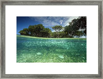 Aquatic Split-level View With Fish Framed Print by Joe Stancampiano