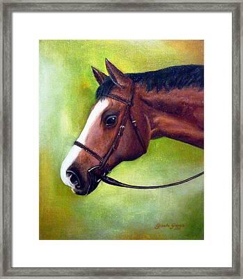 Arabian Horse Framed Print by Gizelle Perez