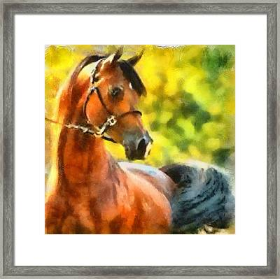 Framed Print featuring the painting Arabian Stallion by Elizabeth Coats